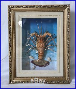 Vintage Lobster Taxidermy Lighted Display