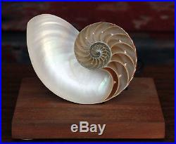 Vintage c. 1950's Nautilus Shell Accent Lamp / Night Light Nautical Seaside
